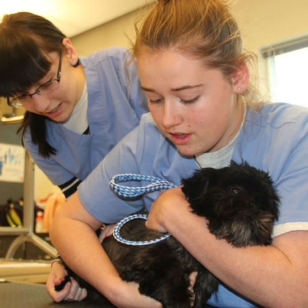 Veterinary Assisting | Northwest Career and Technical Academy | Mount Vernon, WA